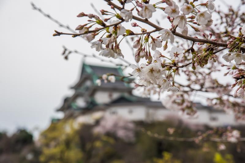 歴史・文化・自然に囲まれた都市で暮らす、和歌山市本町エリア